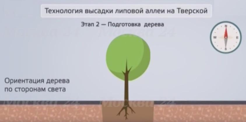 Подготовка дерева к посадке