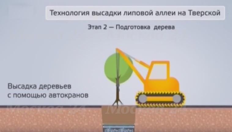 Высадка деревьев с помощью автокрана