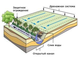 схема дренажа дачного участка